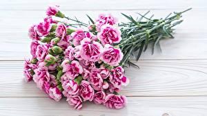 Bilder Blumensträuße Nelken Rosa Farbe