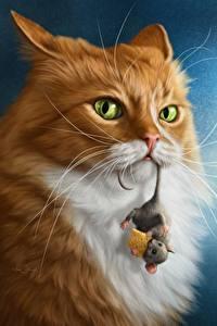Bilder Katze Mäuse Käse Blick Tiere