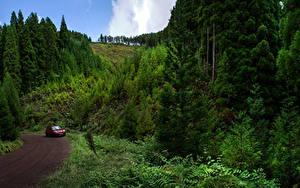 Fotos Portugal Straße Wälder Sao Miguel Azores