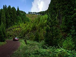 Fotos Portugal Straße Wälder Sao Miguel Azores Natur
