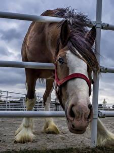 Hintergrundbilder Hauspferd Pferch Zaun ein Tier