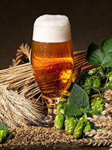 Hintergrundbilder Bier Echter Hopfen Weizen Weinglas Spitzen Schaum Blatt Lebensmittel