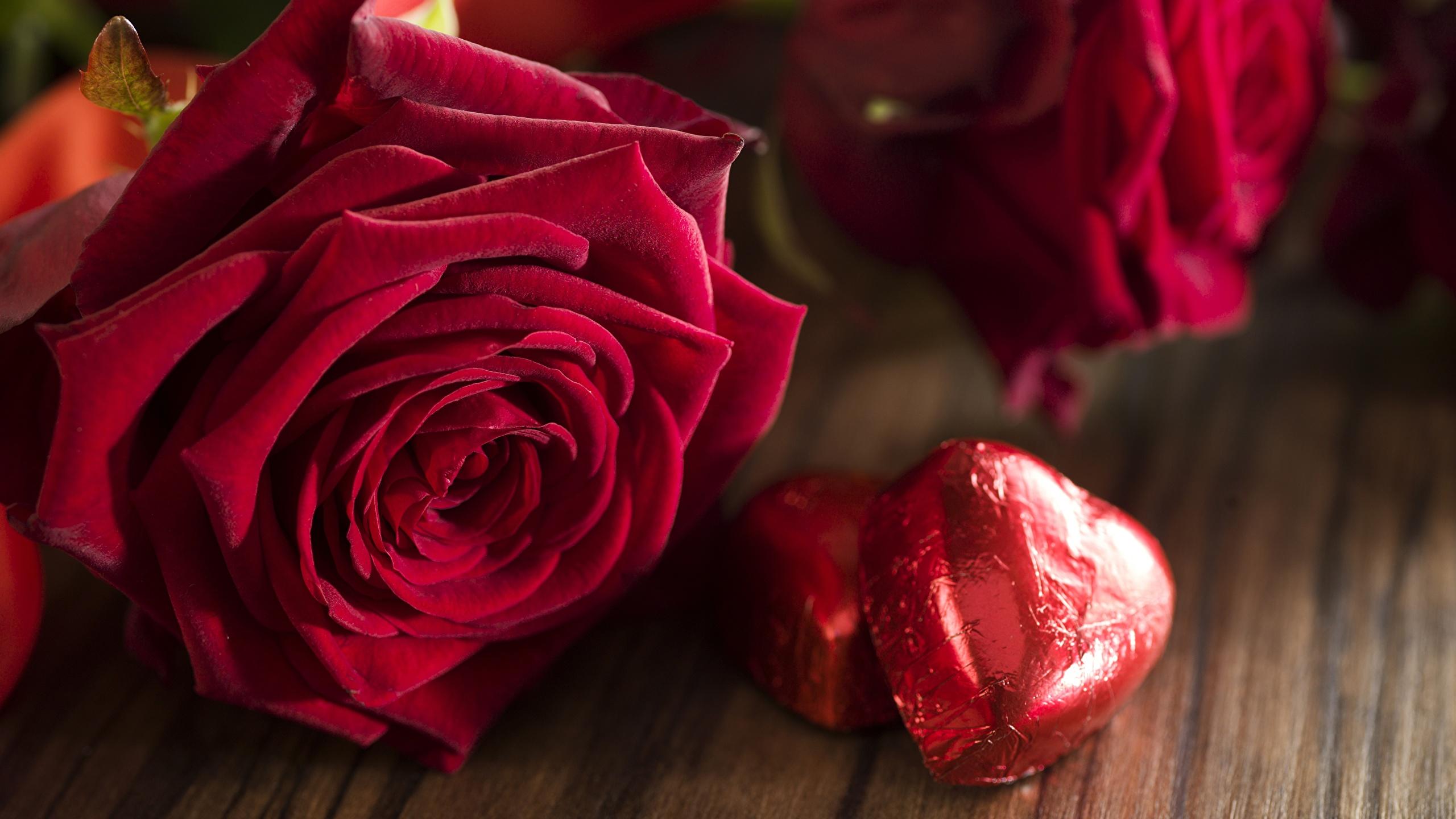 Fonds Decran 2560x1440 Roses Rouge Fleurs Télécharger Photo