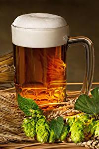 Bilder Bier Echter Hopfen Becher Schaum Ähre Lebensmittel