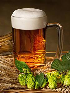 Bilder Bier Echter Hopfen Becher Schaum Ähren Lebensmittel