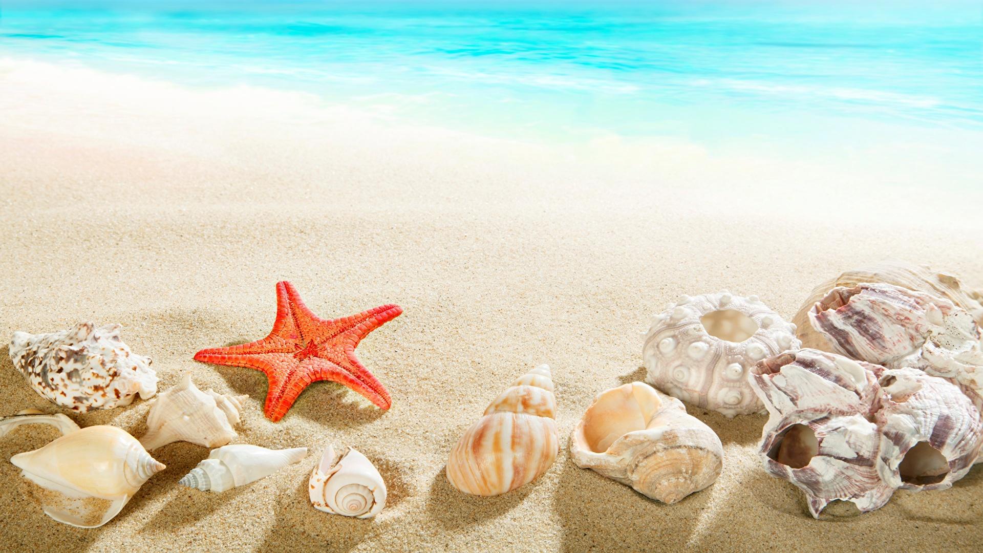 壁紙 19x1080 海 貝殻 ヒトデ ビーチ 砂 自然 ダウンロード 写真