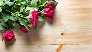 Hintergrundbilder Rosen Großansicht Bretter Rot Blumen