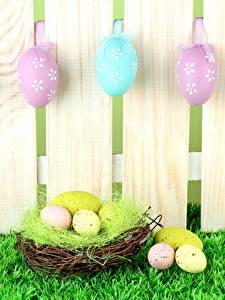 Bilder Feiertage Ostern Zaun Bretter Ei Nest Gras