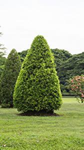 Fotos Thailand Parks Rasen Bäume Suan Luang Rama public park Natur
