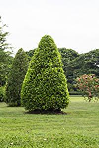 Fotos Thailand Parks Rasen Bäume Suan Luang Rama public park