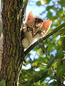 Hintergrundbilder Katze Ast Blattwerk Katzenjunges Starren