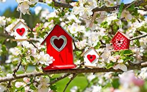 Photo Flowering trees Branches Heart Malus Nest box Flowers