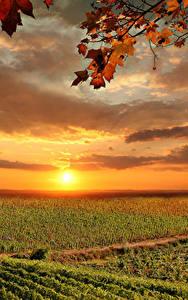 壁纸、、イタリア、トスカーナ州、朝焼けと日没、畑、空、秋、雲、太陽、