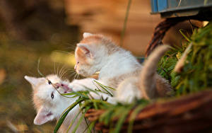 Wallpapers Cat Kittens Two Animals