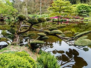 Fotos Frankreich Park Teich Strauch Bäume Maulevrier Natur