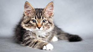 Fotos Katzen Katzenjunges Schnauze