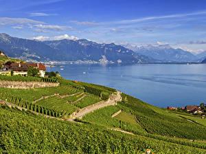 Bilder Schweiz Gebirge See Haus Acker Lavaux region Vaud Natur