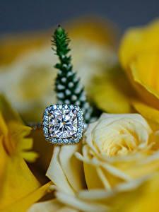 Hintergrundbilder Rosen Großansicht Brillant Gelb Ring Blumen