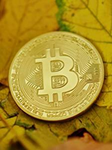 Bilder Geld Bitcoin Münze Nahaufnahme Blattwerk