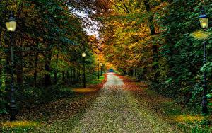 壁纸、、オランダ、秋、公園、木、街灯、Driebergen Utrecht、自然