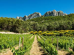 Hintergrundbilder Frankreich Wälder Acker Weinberg Felsen Strauch Provence Natur