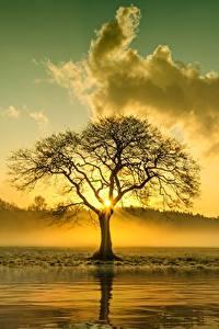 Hintergrundbilder Sonnenaufgänge und Sonnenuntergänge Wolke Bäume Nebel