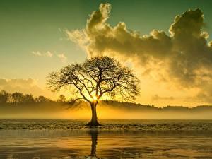 Hintergrundbilder Sonnenaufgänge und Sonnenuntergänge Wolke Bäume Nebel Natur