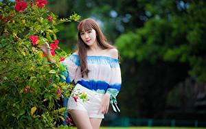 Fotos Asiaten Strauch Unscharfer Hintergrund Braunhaarige Blick Pose Shorts junge Frauen
