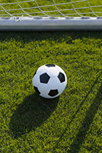 Fotos Fußball Rasen Ball sportliches