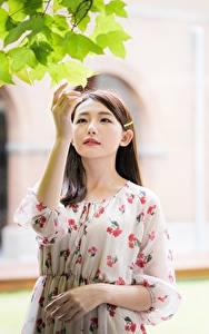 Hintergrundbilder Asiaten Blatt Hand Kleid Braune Haare junge frau