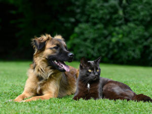 Picture Dog Cats 2 Glance Grass animal