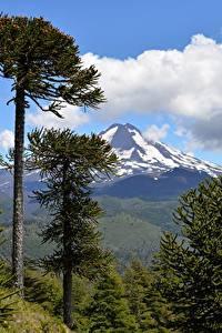 Fotos Chile Gebirge Parks Landschaftsfotografie Bäume  Natur