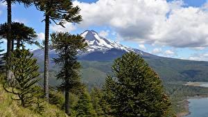 Fotos Chile Gebirge Parks Landschaftsfotografie Bäume