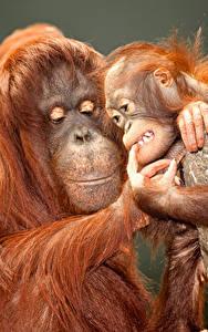 Bilder Affen Jungtiere Zwei Tiere