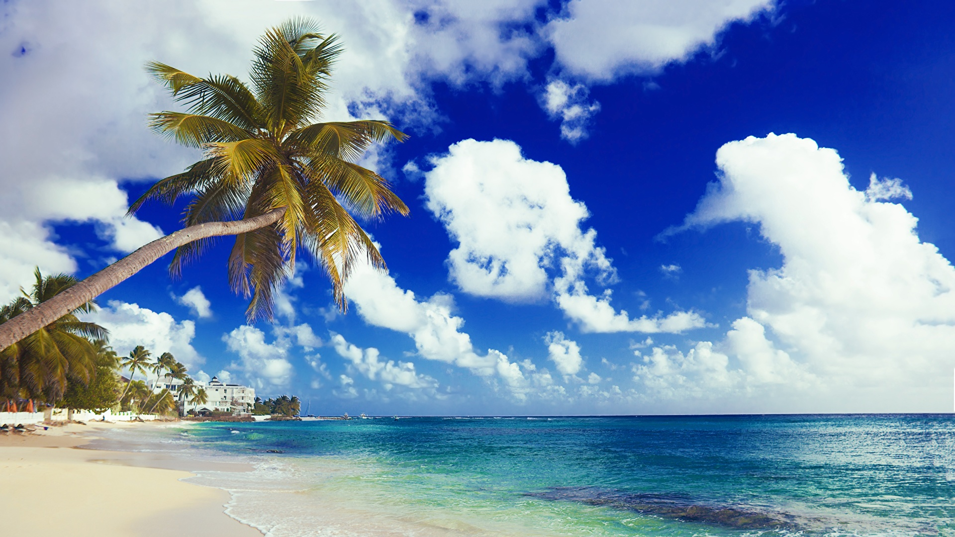 壁紙 1920x1080 海岸 海 空 ヤシ ビーチ 雲 自然