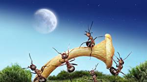 Fotos Ameisen Pilze Natur Mond Laubmoose lolita777 ein Tier