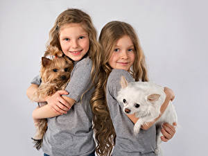 Bilder Hunde Grauer Hintergrund Kleine Mädchen Zwei Lächeln Yorkshire Terrier Welpe Kinder
