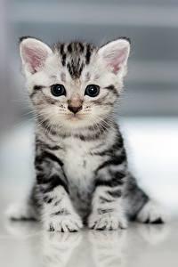 Hintergrundbilder Katze Kätzchen Starren Sitzend Tiere