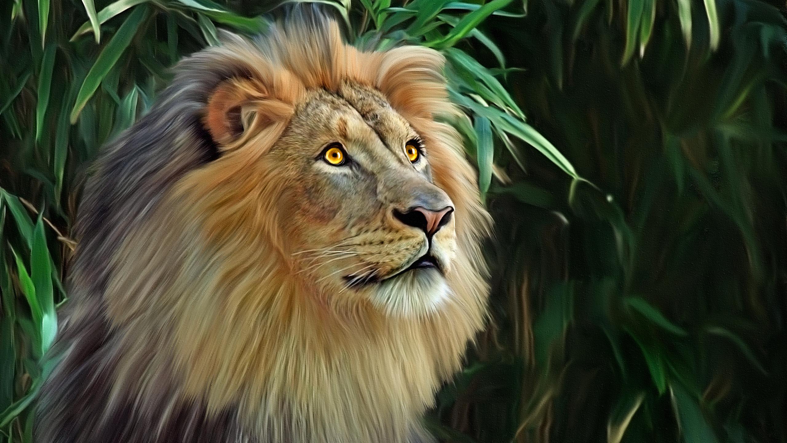 Fonds Decran 2560x1440 Lions Fauve Animaux Télécharger Photo
