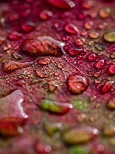 Bilder Makro Hautnah Blatt Tropfen Natur