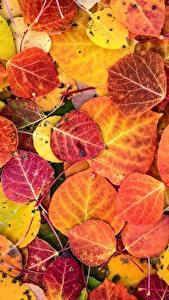Bilder Textur Großansicht Herbst Blatt