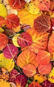 Bilder Textur Großansicht Herbst Blatt Natur