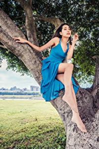 Hintergrundbilder Asiaten Bäume Sitzend Kleid Bein Posiert junge Frauen
