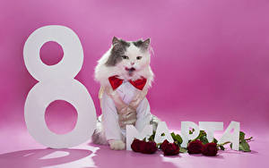 Images Holidays March 8 Cats Roses Wine color Russian Animals Flowers
