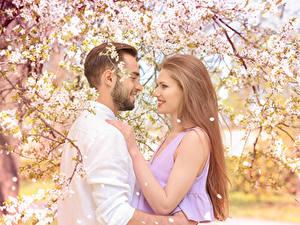 Bilder Liebe Mann Blühende Bäume Zwei Dunkelbraun Lächeln junge frau