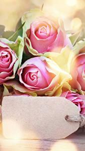 Hintergrundbilder Rosen Nahaufnahme Vorlage Grußkarte Blüte