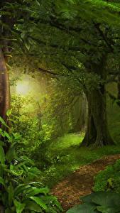 Hintergrundbilder Tropen Wälder Baumstamm Lichtstrahl Gras Bäume Jungle
