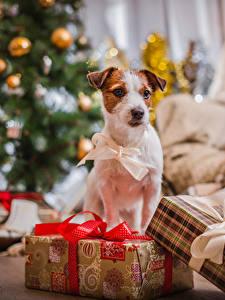 Hintergrundbilder Neujahr Hunde Geschenke Schleife Tiere