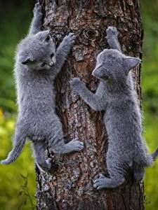 Fotos Hauskatze Katzenjunges 2 Graue Baumstamm Tiere