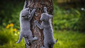 Picture Cat Kitty cat 2 Gray Trunk tree Animals